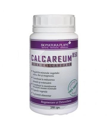 Calcareum-Alga Calcaroasa - Site oficial Dr Catalin Luca